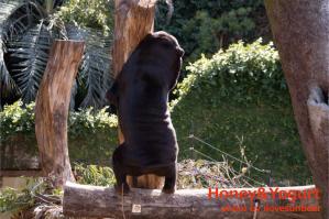 マレーグマ キョウコ 上野動物園