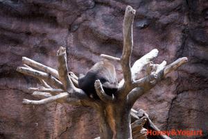 平川動物公園 マレーグマ アトム