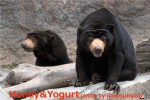 平川動物園 マレーグマ アトムとウラン