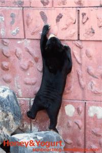 東山動物園 マレーグマ マーチン