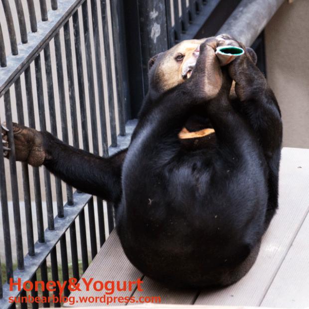 福岡市動物園 マレーグマ マチ
