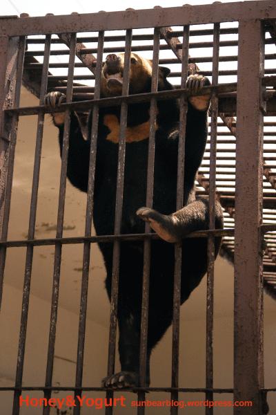 徳山動物園 マレーグマ マーヤ