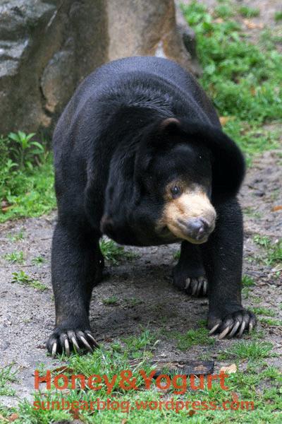 平川動物公園 マレーグマ ウラン