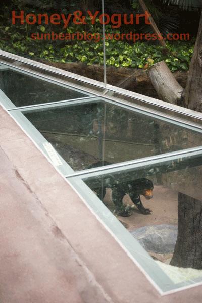 のいち動物公園 マレーグマ放飼場