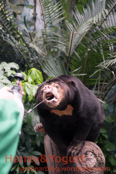 のいち動物公園 マレーグマ ジュースタイム