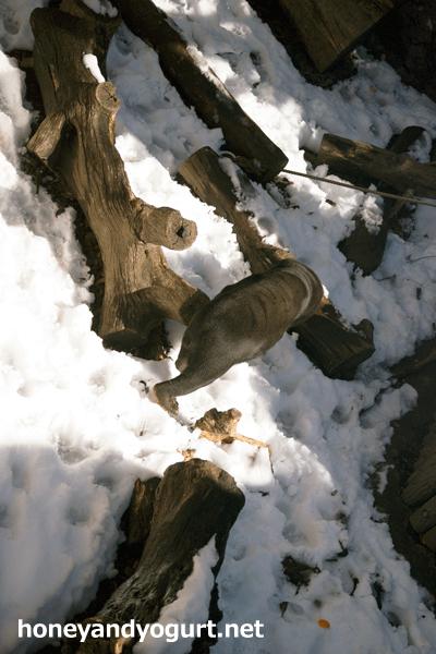 上野動物園 雪のマレーグマ放飼場 キョウコ