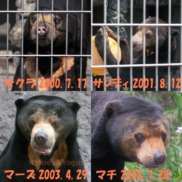 2000年から2009年に生まれたマレーグマの皆様 その1