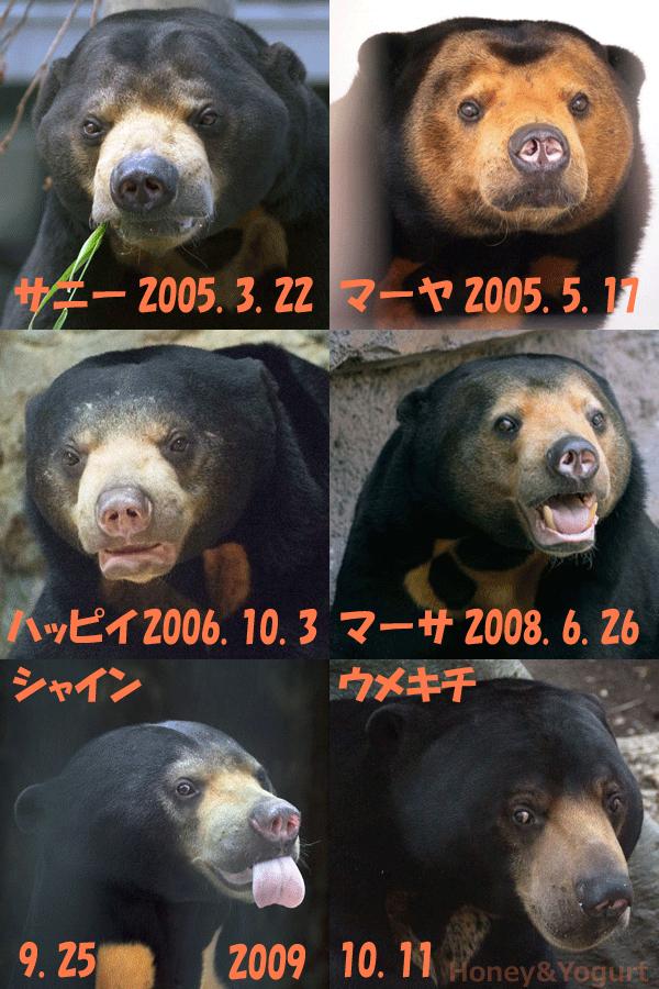 2000年から2009年に生まれたマレーグマの皆様 その2