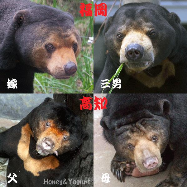 福岡市動物園 のいち動物公園 マレーグマ マチ サニー ワンピイ タオチイ