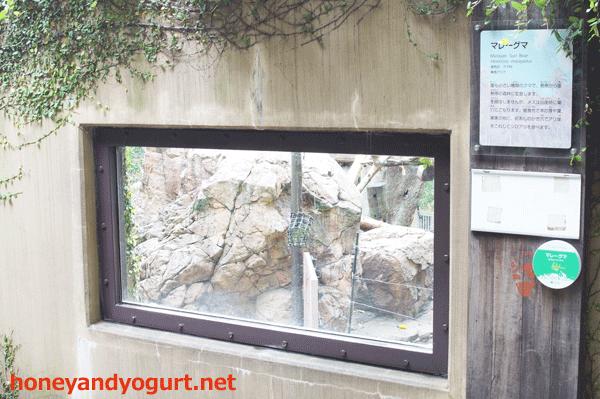上野動物園 マレーグマ放飼場