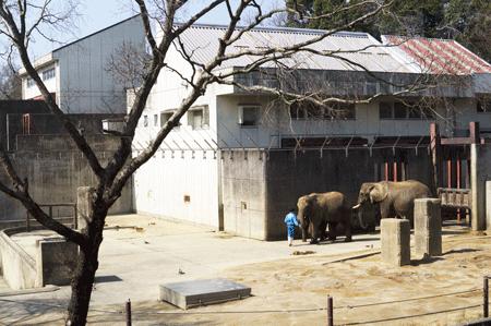 とべ動物園 レストランから見えるゾウ舎