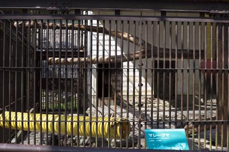 とべ動物園 マレーグマ舎