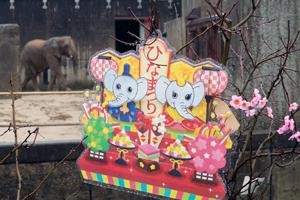 とべ動物園 ひなまつりイベント