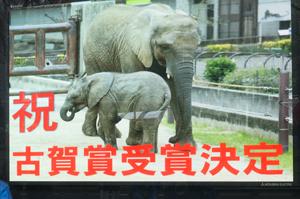 とべ動物園 イベント