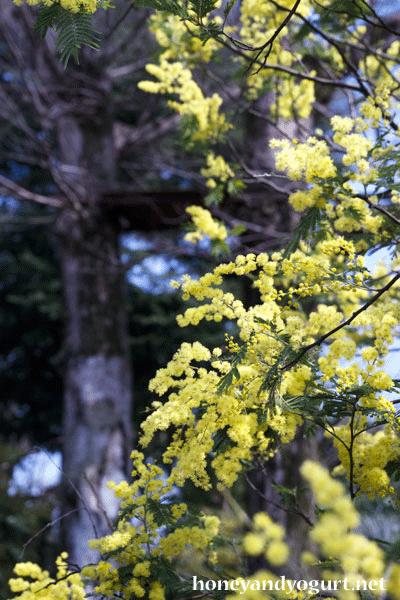 上野動物園 マレーグマ舎 ミモザ