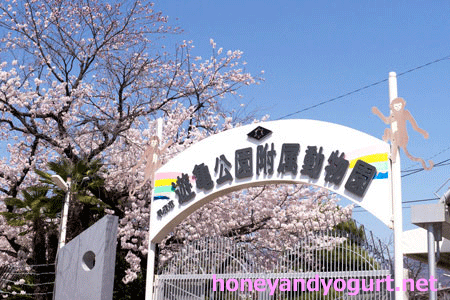 甲府市遊亀公園附属動物園 入口 桜