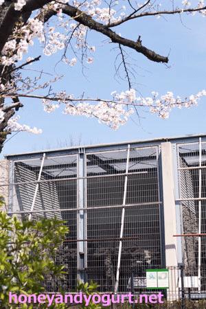 甲府市遊亀公園附属動物園 マレーグマ舎