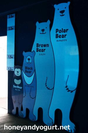 クマの背比べ