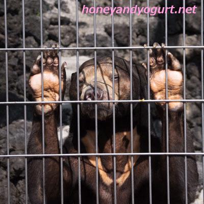 甲府市遊亀公園附属動物園 マレーグマ サンディ