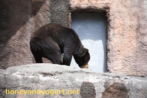 浜松市動物園 マレーグマ チュウタ