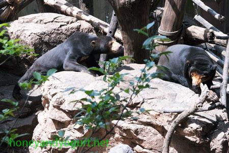 上野動物園 マレーグマ アズマ キョウコ