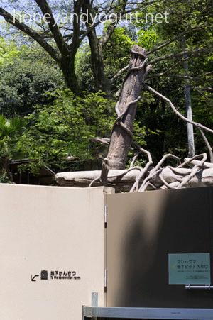 福岡市動物園 マレーグマ放飼場 地下ピット