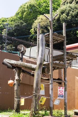 福岡市動物園 旧マレーグマ舎 放飼場 櫓