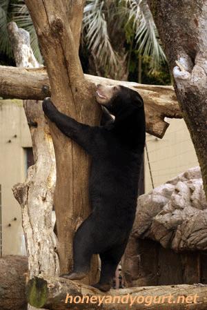 マレーグマ ウメキチ 上野動物園時代