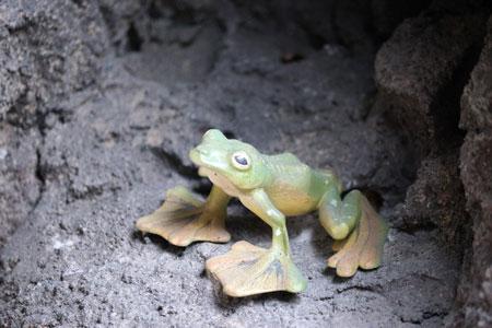福岡市動物園 マレーグマ舎 カエル