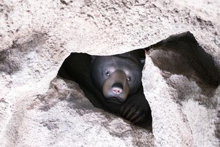 福岡市動物園 マレーグマ舎 頭