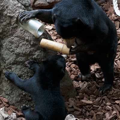 上野動物園 マレーグマ モモコ フジ