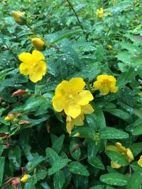 クチナシの花 のいち動物公園 園内