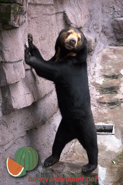 天王寺動物園 マレーグマ マーサ