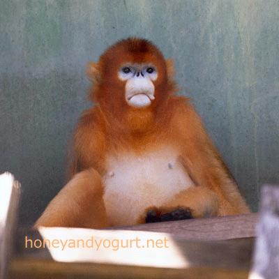 熊本市動植物園 キンシコウ