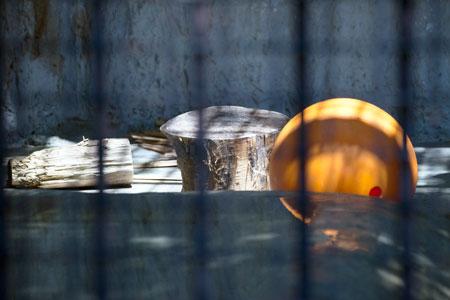 熊本市動植物園 マレーグマ舎