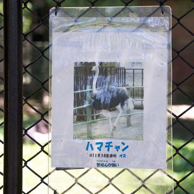 熊本市動植物園 ハマチャン