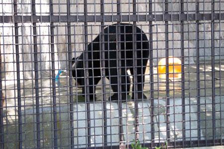 熊本市動植物園 マレーグマ フジ