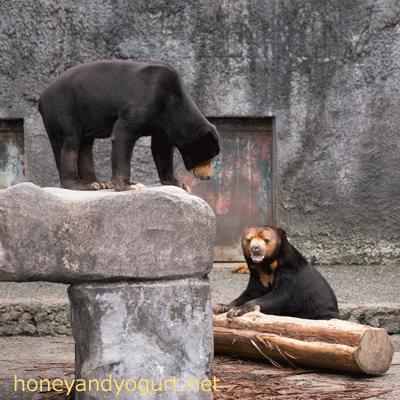 豊橋総合動植物公園 のんほいパーク マレーグマ シャンシャン ノン
