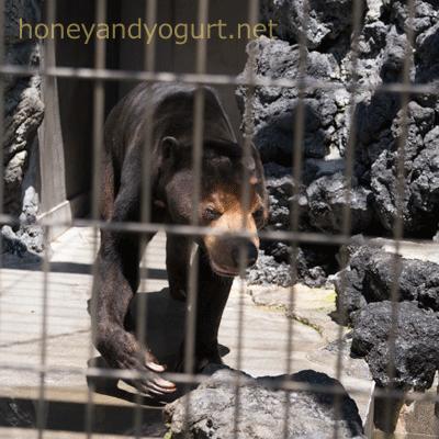 遊亀公園附属動物園 マレーグマ サンディ
