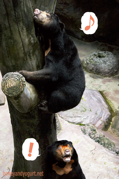高知県立のいち動物公園 マレーグマ ワンピイ タオチイ
