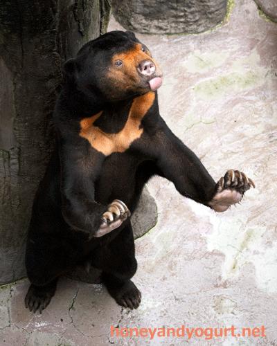 マレーグマ ワンピイ 高知県 のいち動物公園