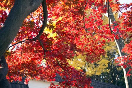 上野動物園 東園 食堂前 紅葉