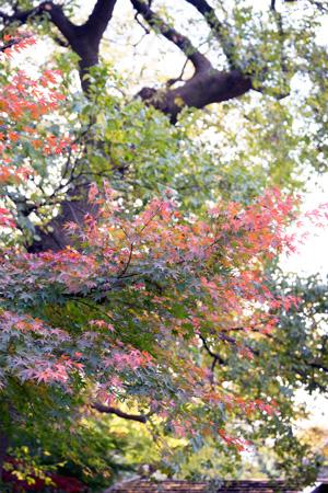 上野動物園 紅葉