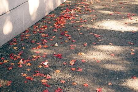 上野動物園 園内 落ち葉