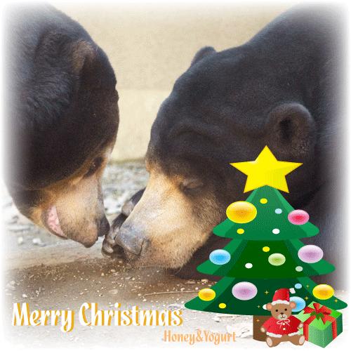 マレーグマ 動物園 クリスマス