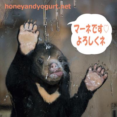 東山動植物園 マレーグマ マーネ