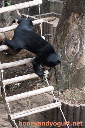 マレーグマ フジ 上野動物園