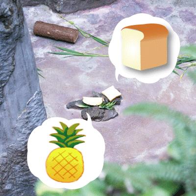 のいち動物公園 マレーグマ舎