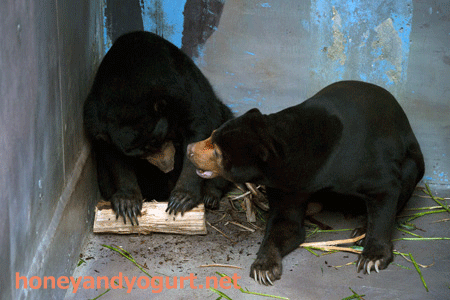 のいち動物公園 マレーグマ ワンピイ タオチイ