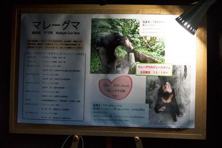 のいち動物公園 ジャングルミュージアム マレーグマ舎